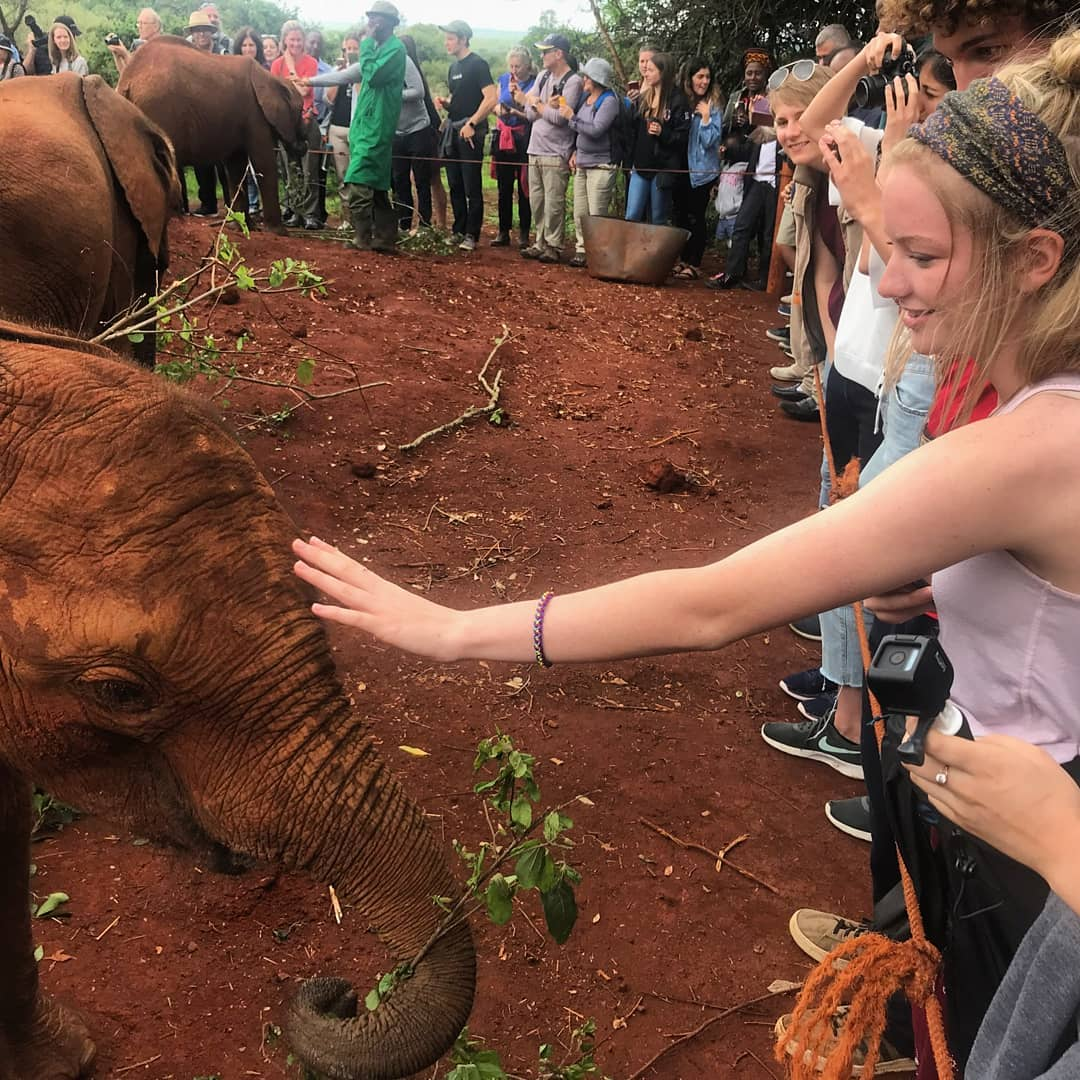 students petting an elephant